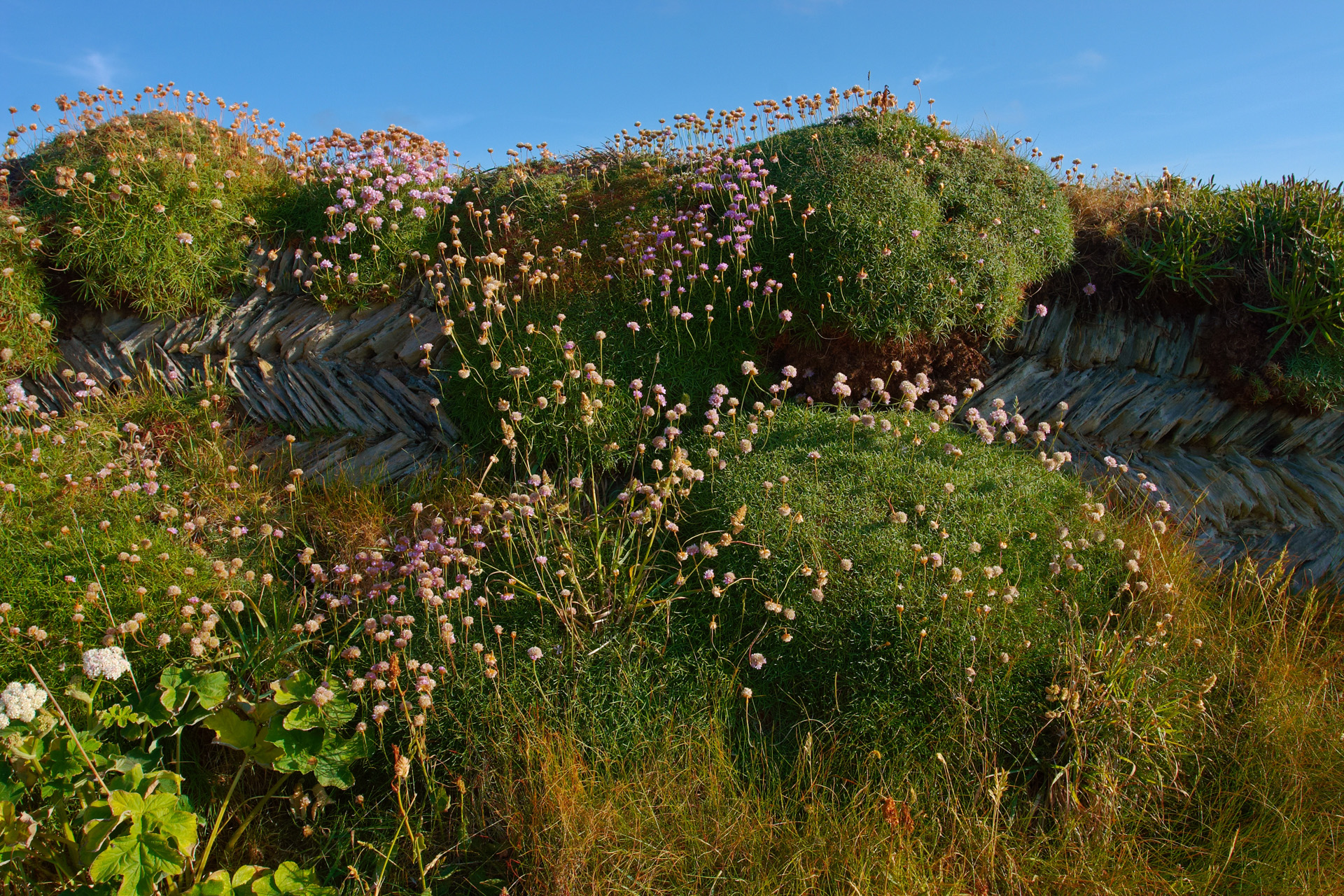 Dry stone wall overgrown with moss, grass and wild flowers near