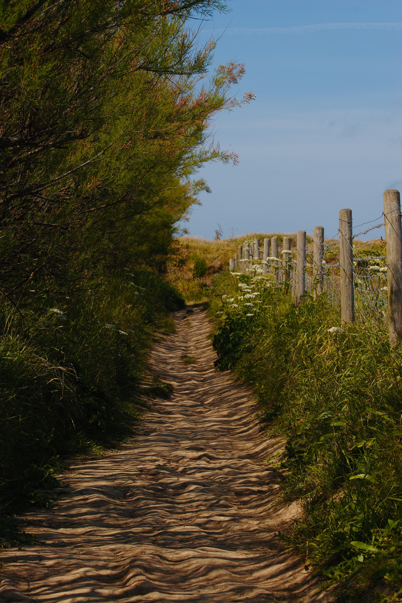 Sheltered Path along the North Cornwall Coast between Bedruthan