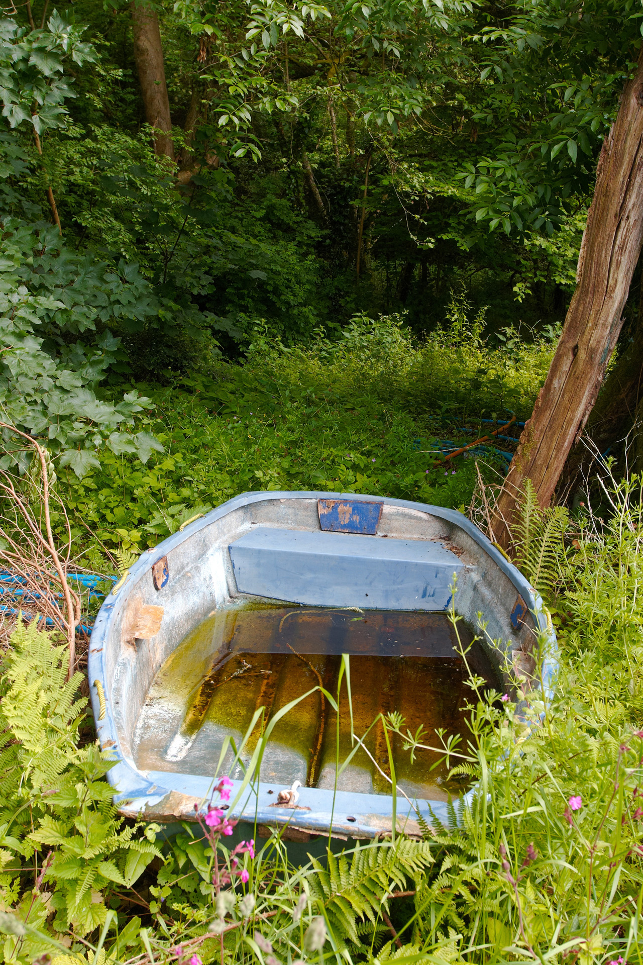 Abandoned rowing boat along the Camel Trail