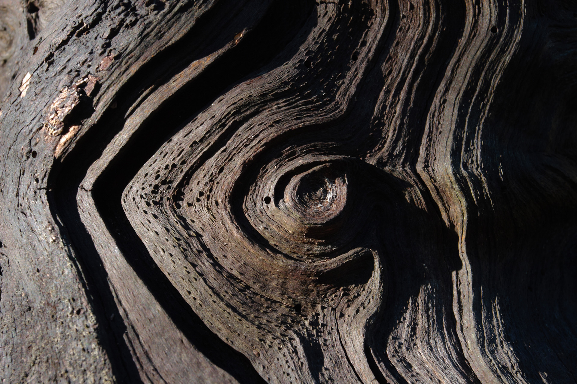 Weathered wood spiral whorl pattern