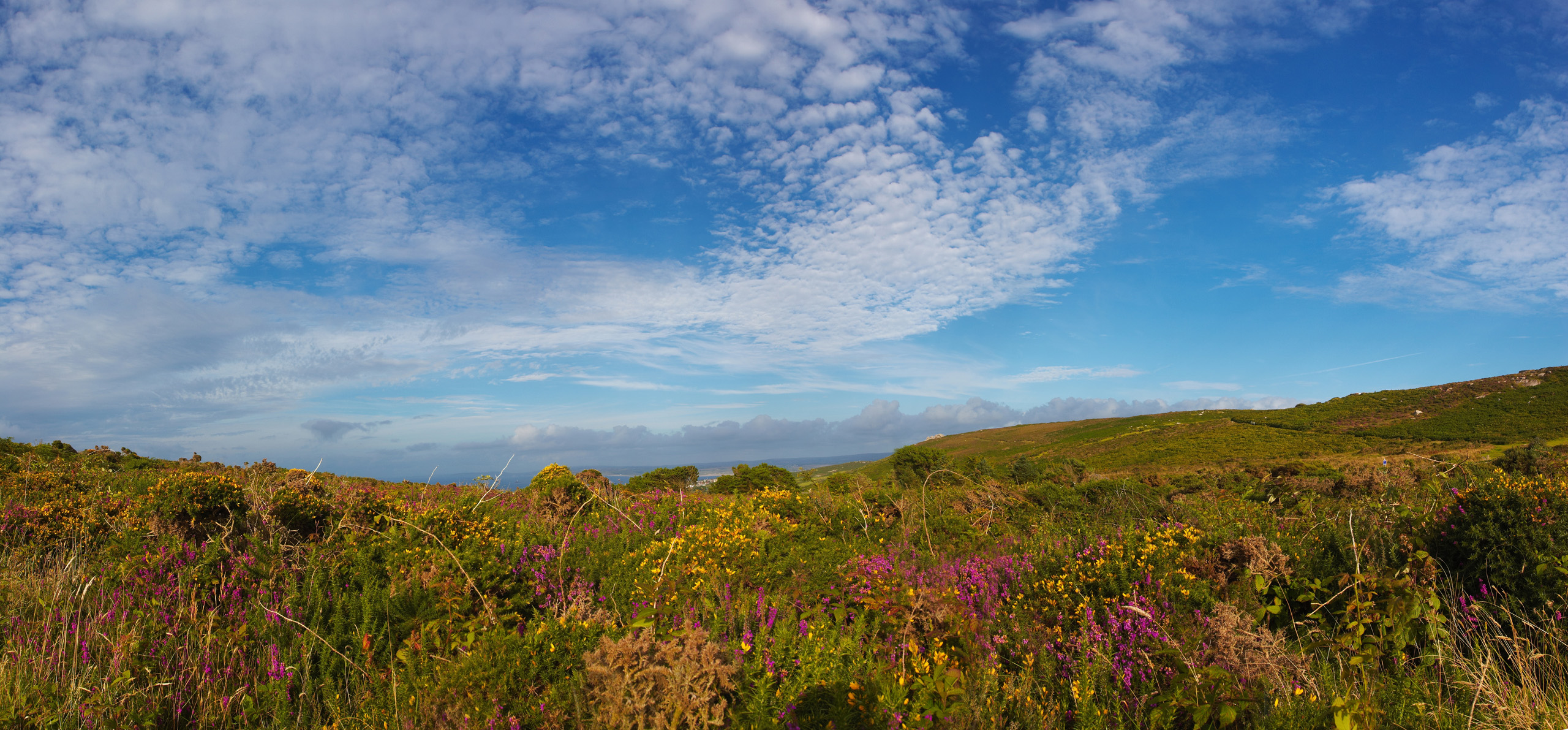 Rosewall Hill Heather and Gorse Panorama