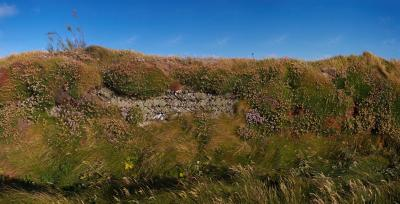Overgrown Dry Stone Wall On The Cliffs Near Bedruthan Steps