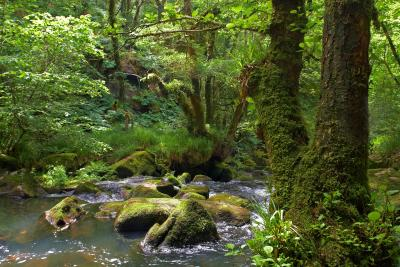 Golitha Falls Lower Reaches