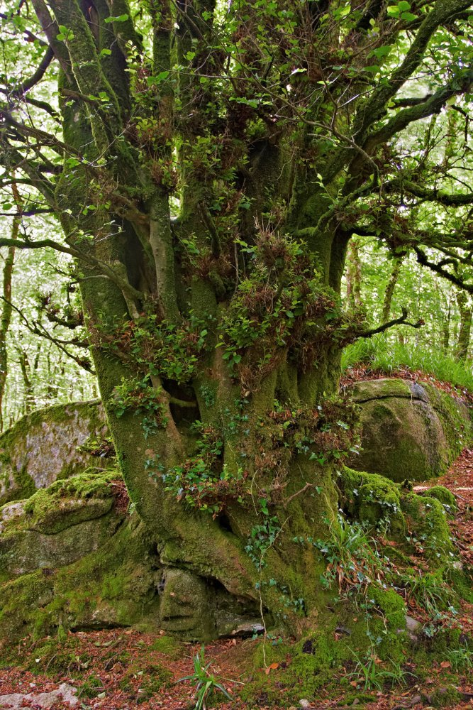 Old Mossy