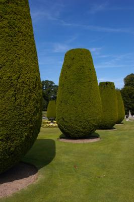 Lanhydrock House Topiary