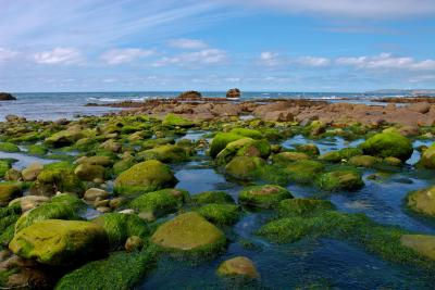 Green Rocks at Millook Haven, Cornwall