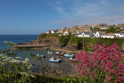 Port Isaac Through Red Valerian