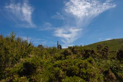 Carn Galver Tin Mine viewed across the gorse bushes, Penwith, Co