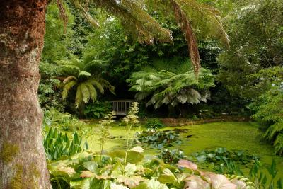 Pond and Bridge at Trengwainton Garden
