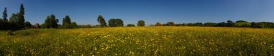 Buttercup Meadow Panorama at Wittenham Clumps