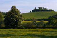 Wittenham Clumps