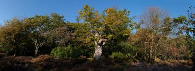 Burnham Beeches Moat Autumn Panorama