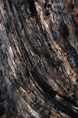 Heavily Weathered Bark Texture