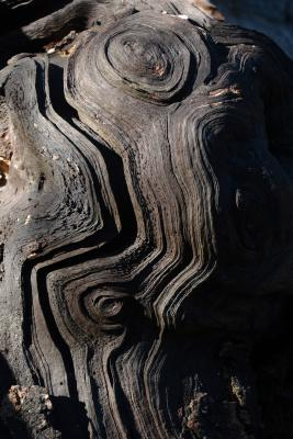 Old Weathered Wood Spiral Pattern