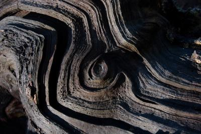Weathered Wood Whorl and Grooves